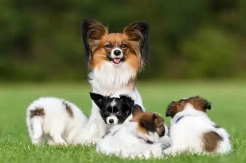 Zucht, Welpen und Junghunde